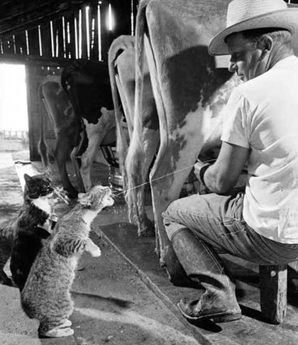 cats-love-milk.jpg
