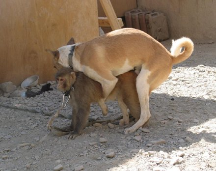 dog-befriends-monkey.jpg