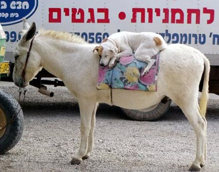 dog-on-a-donkey.jpg