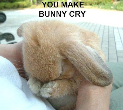 you-make-bunny-cry.jpg