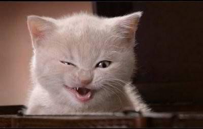 funny-cat-1.jpg