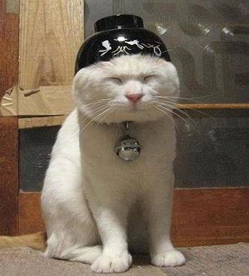 funny-cat-10.jpg