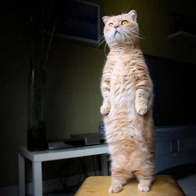 funny-cat-11.jpg