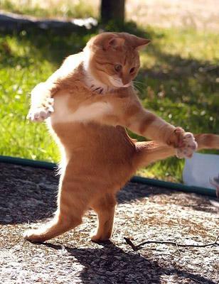 funny-cat-16.jpg