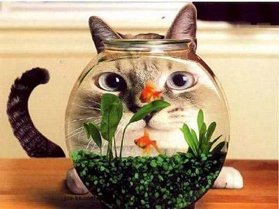 funny-cat-2.jpg