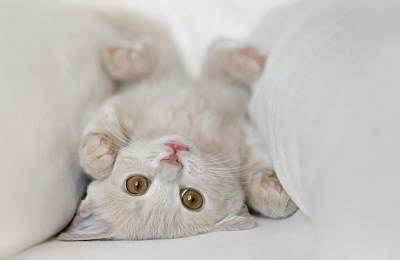 funny-cat-3.jpg