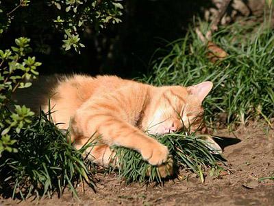funny-cat-5.jpg