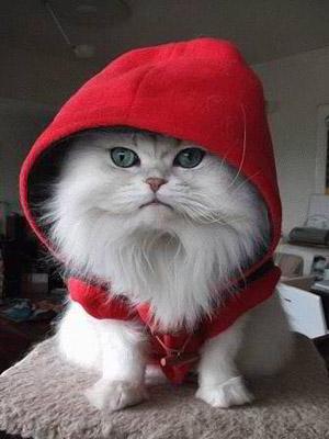 funny-cat-6.jpg