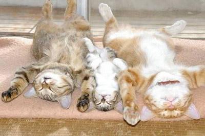 funny-cat-7.jpg
