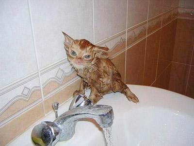 funny-cat-8.jpg
