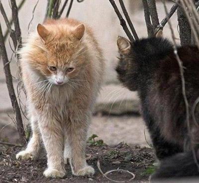 funny-cat-9.jpg